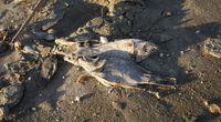 Na dnie Bałtyku coraz więcej martwych stref