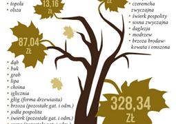 Nielegalne wycięcie drzewa to kara sięgająca nawet kilku milionów złotych