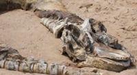 Giganty wyrzucone przez morze