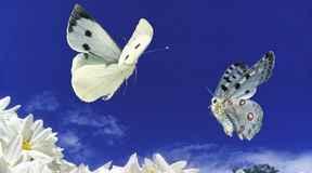 Najdziwniejsze motyle świata