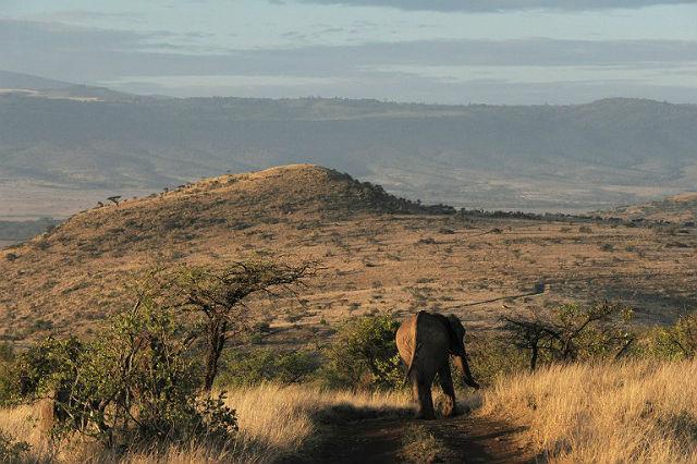 Góra Kenia - rezerwat Lewa, Kenia