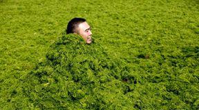 Zielona inwazja