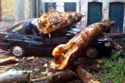 O krok od tragedii. Drzewo przygniot�o auto!