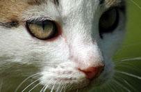 Kot zara�ony w�cieklizn� pogryz� dziecko