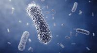 Atakuje kolejny wirus ptasiej grypy
