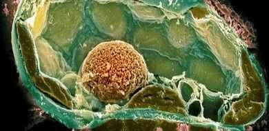 Plastikowa komórka stworzona w laboratorium