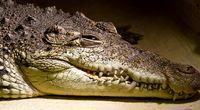 Gigantyczny krokodyl