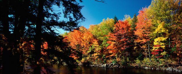 Po co liście jesienią zmieniają kolor?
