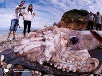 Legendarny potwór wyrzucony na plażę!