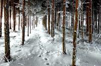 Po ciepłych zimach drzewa śpią dłużej