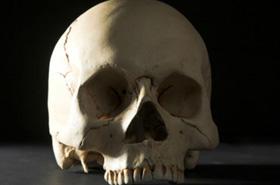 """Makabryczne odkrycie. Na czaszce był napis """"śmierć pedofilom"""""""