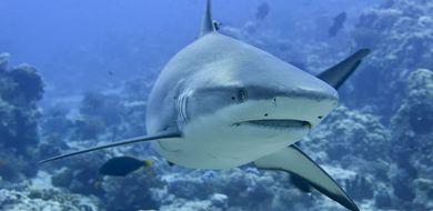 Największe złowione rekiny