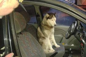Otworzyli drzwi radiowozu, pies tylko na to czekał!
