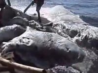 Morze wyrzuciło na brzeg tajemniczą bestię