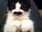 Zwierzaki z wąsami są boskie!