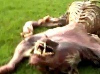 Tajemnicza istota masakruje całe hodowle. Do akcji wkracza ministerstwo