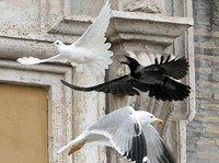 Niezwykłe znaki w Watykanie. Wszyscy czekają na koniec świata?