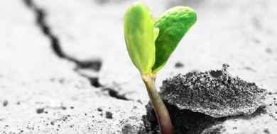 Rośliny mogą czuć pole magnetyczne Ziemi