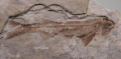Chińskie Pompeje sprzed 120 mln lat