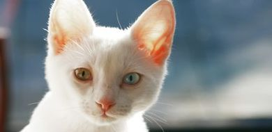 Niebezpieczne kocie ugryzienia