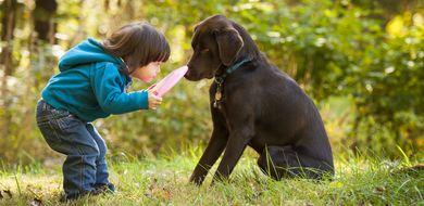 Psy podobnie do nas reagują na dźwięki