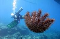 Nurkowie oczyszczaj� Morze Ba�tyckie ze �mieci