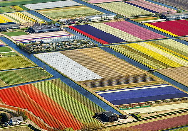Lisse, Holandia - Strona 13 - Wiadomou015bci - WP.PL