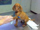 Niekt�re zwierzaki naprawd� nie cierpi� wizyt u weterynarza