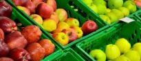 Polskie jabłka dotarły do Singapuru i Indii zepsute