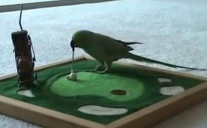Ale talent! Ta papuga jest niesamowita