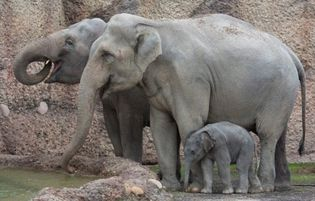 """""""Mamo, na pomoc!"""" - czyli słonik w tarapatach"""