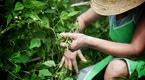 Szansa dla gospodarstw rolnych