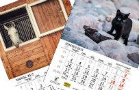 Zwierz�ce kalendarze na 2015 rok - akcja charytatywna dla schroniska