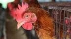 Konspol postawi fermę w Indonezji