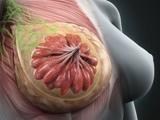 Polski wynalazek do walki z rakiem piersi