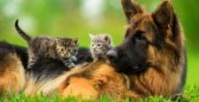 Petsee.pl - społecznościówka dla miłośników zwierząt