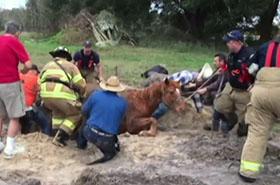 Uratowali konia, który wpadł do dołu