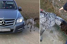 Jechała autem, a pies na smyczy biegł obok