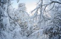 Prognoza długoterminowa - powrót zimy