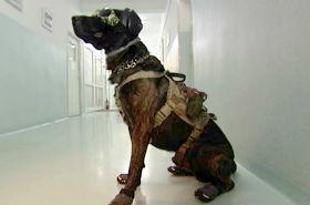 Rico - jedyny taki pies w Polsce