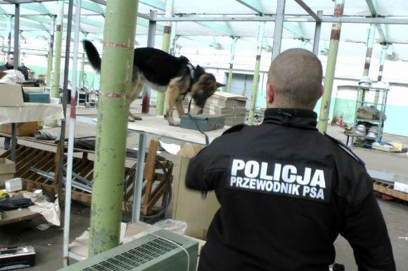 Trening psów specjalnych