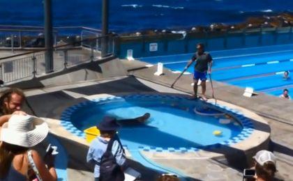 Zabawa z lwem morskim wymknęła się spod kontroli
