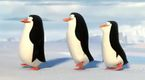 Pingwiny z Madagaskaru - Nowy w ekipie