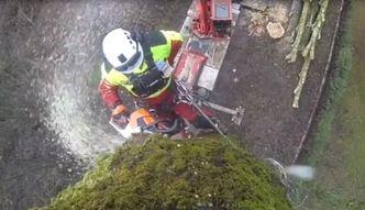 Jak wygląda ścinanie ulicznych drzew?