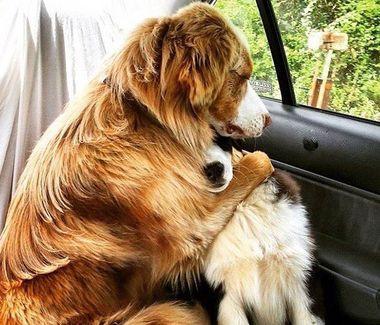 Psi przyjaciele
