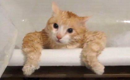Za co uwielbiamy koty?
