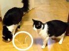 Jak wyprowadzić kota z równowagi?