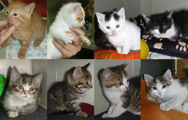 Znalezione obrazy dla zapytania koty w schronisku