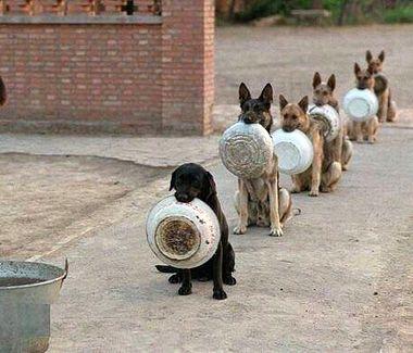 Policyjne psy w oczekiwaniu na posi�ek