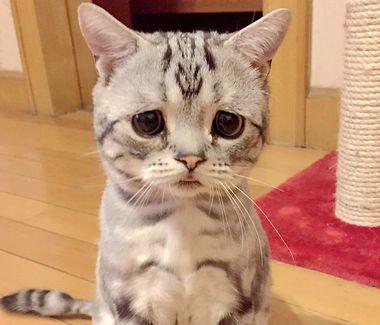 Najsmutniejszy kot internetu